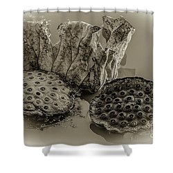 Floating Lotus Seed Pods 2 Shower Curtain