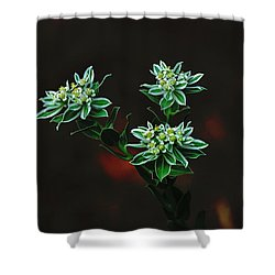 Floating Petals Shower Curtain