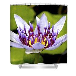 Floating Purple Waterlily Shower Curtain by Lehua Pekelo-Stearns