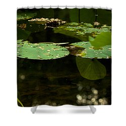 Floating World 1 - Lily Pads  Shower Curtain by Jane Eleanor Nicholas