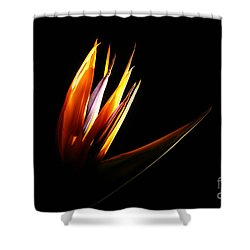 Flor Encendida Detalle Shower Curtain