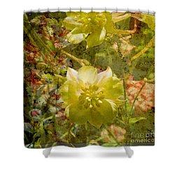 Shower Curtain featuring the photograph Floral Haze by Liz  Alderdice