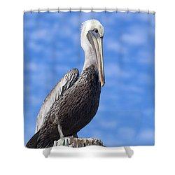 Florida Brown Pelican Shower Curtain