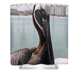 Shower Curtain featuring the photograph Florida's Finest Bird by David Nicholls