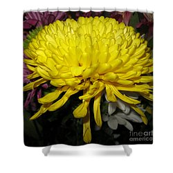 Yellow Queen. Beautiful Flowers Collection For Home Shower Curtain