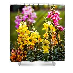 Flower - Antirrhinum - Grace Shower Curtain by Mike Savad