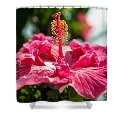Shower Curtain featuring the photograph Flower Closeup by Yew Kwang
