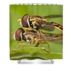 Flower Flies Mating Shower Curtain by Clarence Holmes