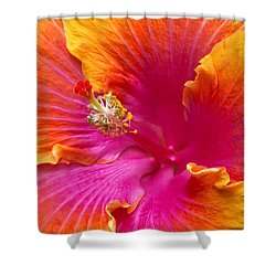 Flower - Hibiscus Rosa-sinesis - Chinese Hibiscus - Appreciation Shower Curtain by Mike Savad