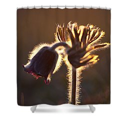 Flower In Back Light Shower Curtain