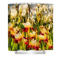 Flower - Iris - Mildred Presby 1923 Shower Curtain by Mike Savad