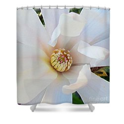 Flower Magnolia White Shower Curtain by Joyce Woodhouse