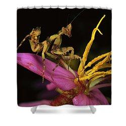 Flower Mantis Nymph Shower Curtain by Mark Moffett