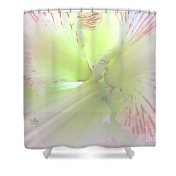 Flower Of Light Shower Curtain