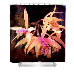 Flower - Orchid - Laelia - Midnight Passion Shower Curtain by Mike Savad