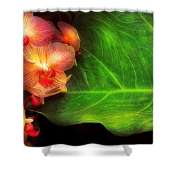 Flower - Orchid - Phalaenopsis Orchids At Rest Shower Curtain by Mike Savad