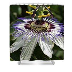 flower-Passionfruit Shower Curtain