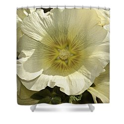 Flower Petals Of A White Flower Shower Curtain