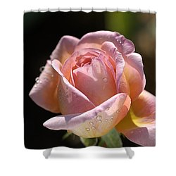 Flower-pink And Yellow Rose-bud Shower Curtain