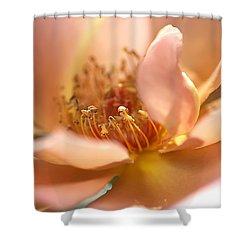 Flower-rose-soft Pink-gold Center Shower Curtain by Joy Watson