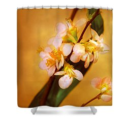 Flower - Sakura - A Touch Of Spring Shower Curtain by Mike Savad