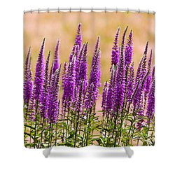 Flower - Speedwell Figwort Family - I Dream Of Lavender  Shower Curtain by Mike Savad