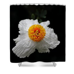 Flower Sunny Side Up Shower Curtain