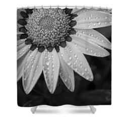 Flower Water Droplets Shower Curtain by Ron White