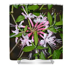 Shower Curtain featuring the photograph Flower Wheel by Tara Potts