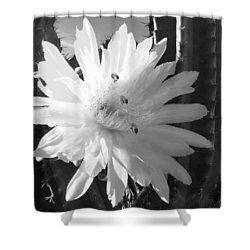 Flowering Cactus 5 Bw Shower Curtain