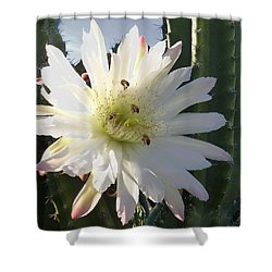 Flowering Cactus 5 Shower Curtain