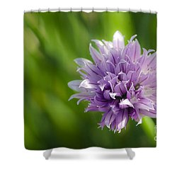 Flowering Chive Shower Curtain by Dee Cresswell