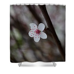 Flowering Plum 3 Shower Curtain