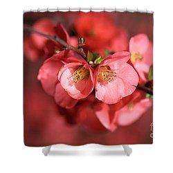Flowering Quince Shower Curtain by Joy Watson