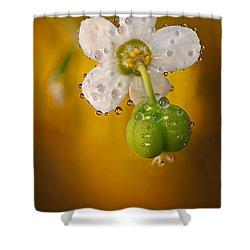 Flowering Spurge  Shower Curtain