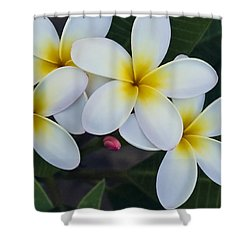 Flowers And Their Bud Shower Curtain