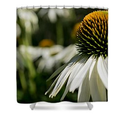Flowers - Echinacea White Swan Shower Curtain