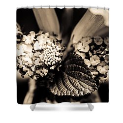 Flowers In A Jar Shower Curtain by Marco Oliveira