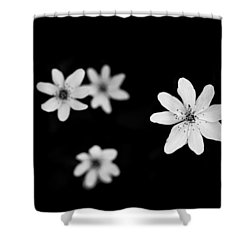 Flowers In Black Shower Curtain