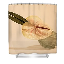 Flowers In Vases 6 Shower Curtain