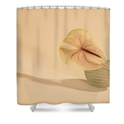 Flowers In Vases1 Shower Curtain