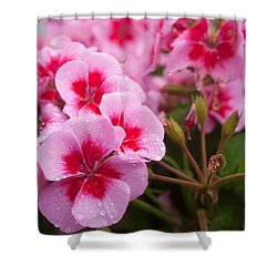 Flowers On A Rainy Sunday Afternoon Shower Curtain