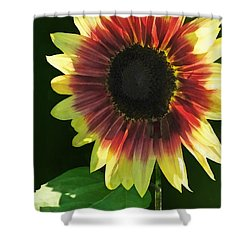 Flowers - Sunflower Ring Of Fire Shower Curtain by Susan Savad