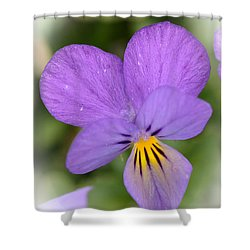 Shower Curtain featuring the photograph Flowers That Smile by Kerri Farley