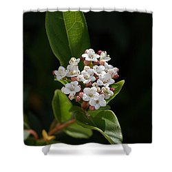 Flowers-tiny White Shower Curtain by Joy Watson