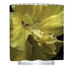 Flowing Petals Of The Chinese Hibiscus Shower Curtain