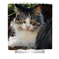 Fluffy Cat Shower Curtain by Pamela Walton