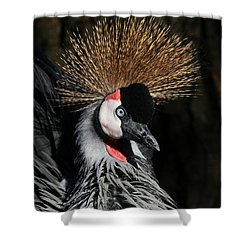 Fluffy Shower Curtain by Judy Whitton