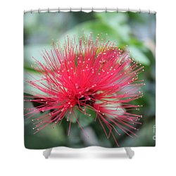 Fluffy Pink Flower Shower Curtain by Sergey Lukashin
