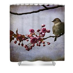 Fluffy Sparrow  Shower Curtain by Barbara Orenya